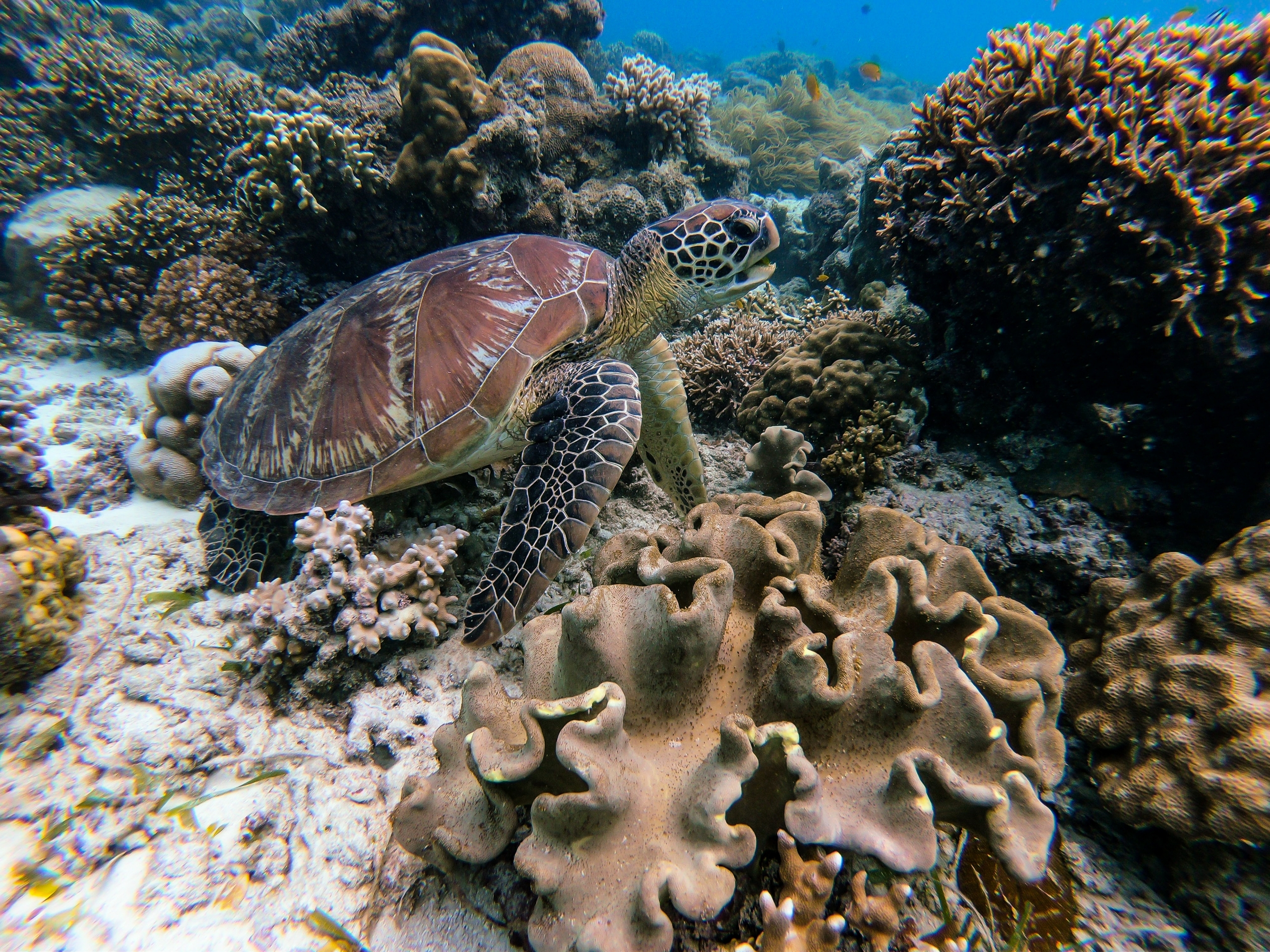 abacos-inslands-parks-reefs